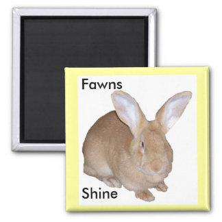 Square Fawn Flemish Giant Rabbit Magnet