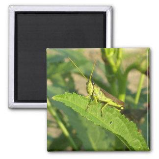 Square Grasshopper Magnet