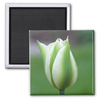 Square Magnet: Green Tulip 2 Inch Square Magnet