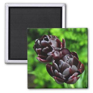 Square Magnet: Purple Tulips 2 Inch Square Magnet
