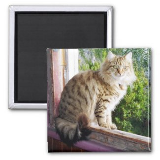 Square magnet - Shirl in Window