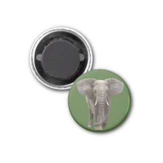 Square of the African elephant it is, magnet and N