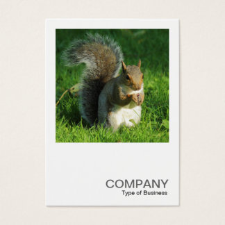 Square Photo 0552 - Grey Squirrel Eating Nuts Business Card