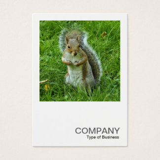 Square Photo 0553 - Startled Grey Squirrel Business Card