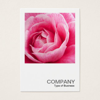 Square Photo 082 - Pink Camelia Business Card