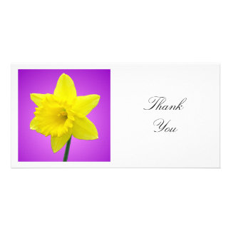 Square Photo - Daffodil on Magenta and Purple Card