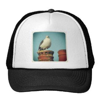 Square Photo - Favourite Perch Hat