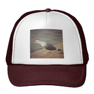 Square Photo - Squawking Seagull Trucker Hat