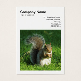 Square Photo (v3) - Grey Squirrel Eating Nuts Business Card