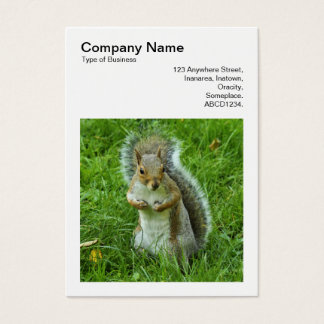 Square Photo (v3) - Startled Grey Squirrel Business Card