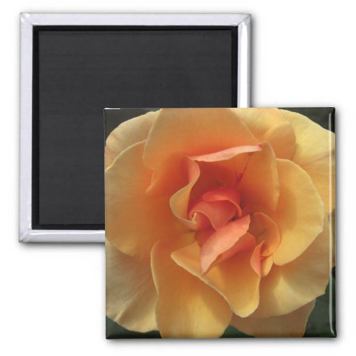 Square Rose Blossom Magnets