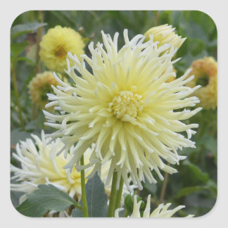 Square sticker garden of white and yellow dahlias