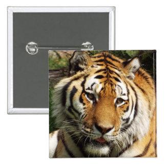 Square Tiger Badge Pinback Button