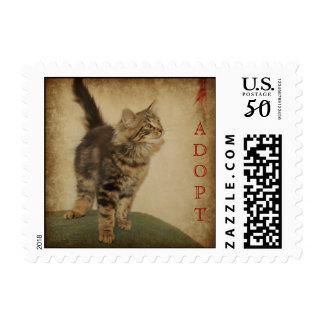 Square US Postage Stamp - Grey Tiger Kitten