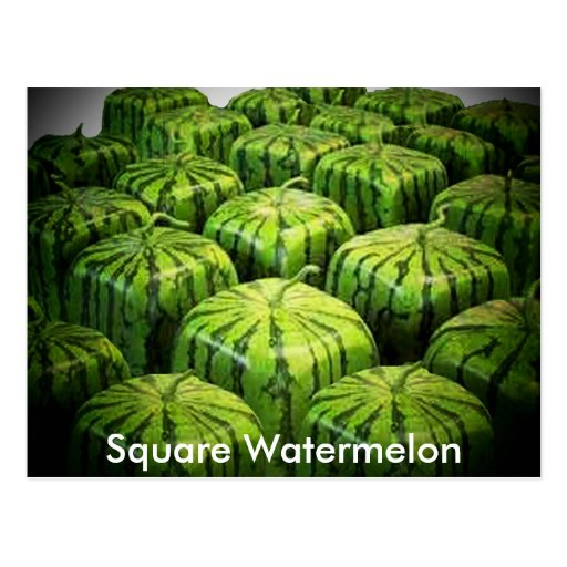 Square Watermelon Post Cards