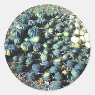 Squash Harvest Classic Round Sticker