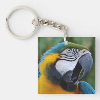 Squawking Parrot Single-Sided Square Acrylic Keychain