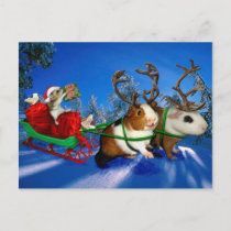 Squeaky Christmas Holiday Postcard