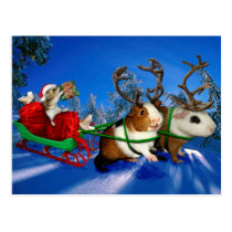 Squeaky Christmas Postcard