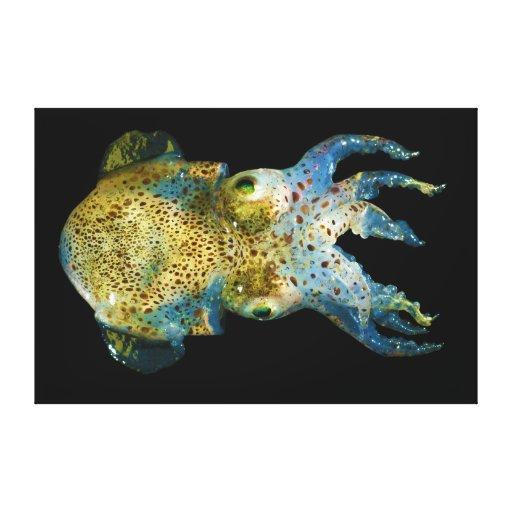 Squid Bobtail Dumpling Stubby Sepiola Atlantica Stretched Canvas Print