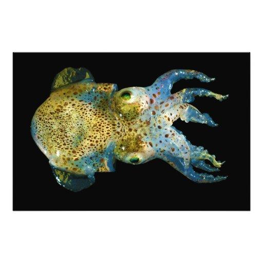 Squid Bobtail Dumpling Stubby Sepiola Atlantica Art Photo