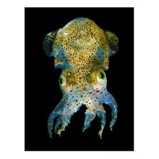 Squid Bobtail Dumpling Stubby Sepiola Atlantica Postcard