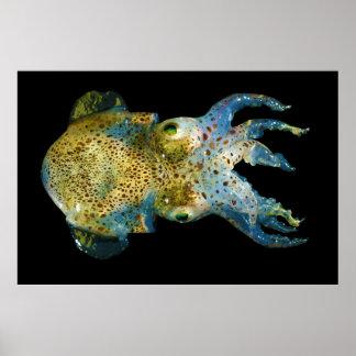 Squid Bobtail Dumpling Stubby Sepiola Atlantica Poster