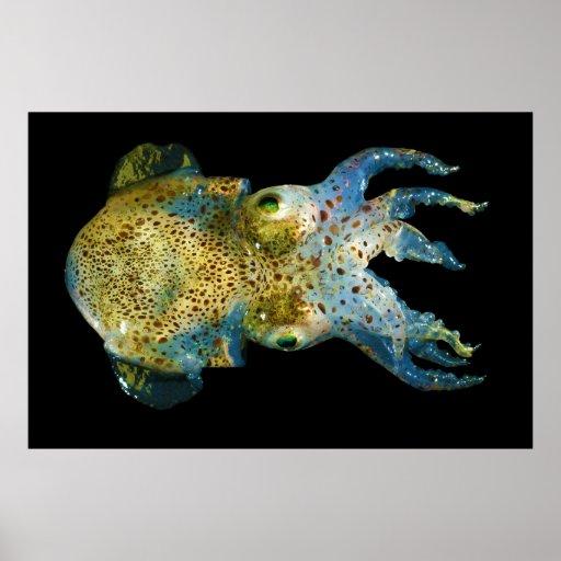 Squid Bobtail Dumpling Stubby Sepiola Atlantica Print