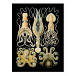 Squid & Octopus Post Card