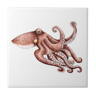 Squid - Octopus vulgaris Tile
