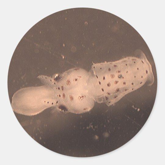 Squid Paralarvae Classic Round Sticker