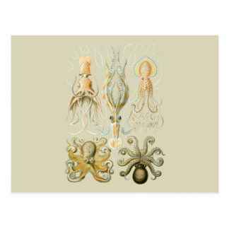 Squids and Octopods Postcards