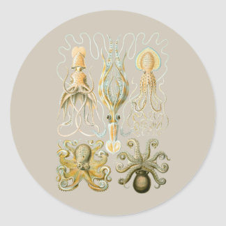Squids and Octopods Round Stickers
