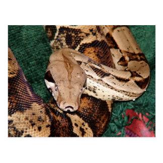 Squiggles la serpiente postales