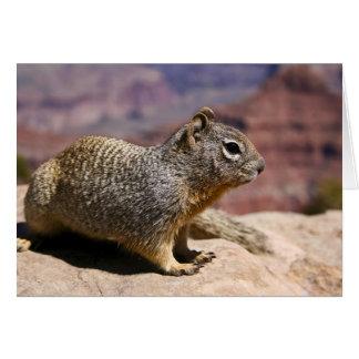 Squirel at the Grand Canyon Card