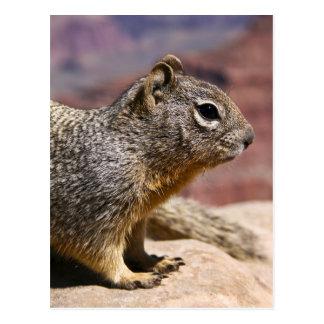 Squirel at the Grand Canyon Postcard