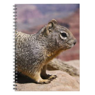 Squirel at the Grand Canyon Spiral Note Book