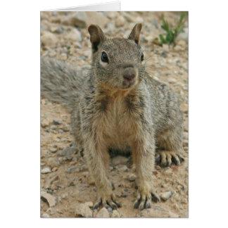 squirel card
