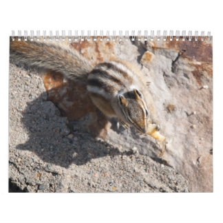 squirel eating  calendar