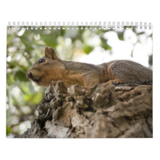 squirel on wood calendar
