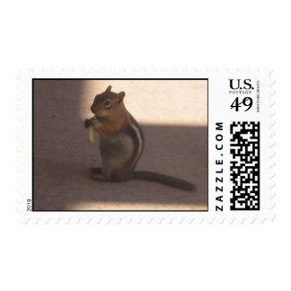 squirel stamp