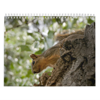 squirel staring calendar