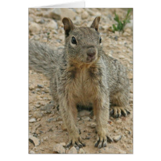 squirel tarjeta pequeña