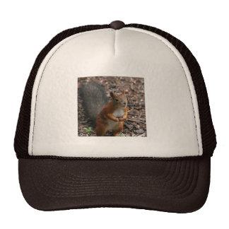 Squirell Trucker Hat