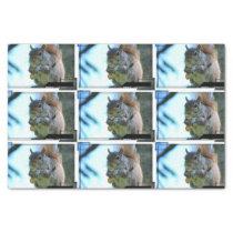 squirrel-13.jpg tissue paper