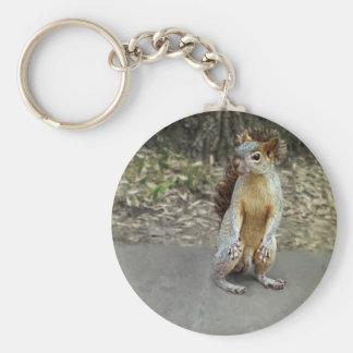 Squirrel 1 basic round button keychain