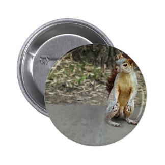 Squirrel 1 button