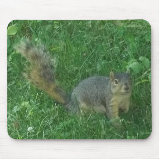 squirrel 1 mouse pad