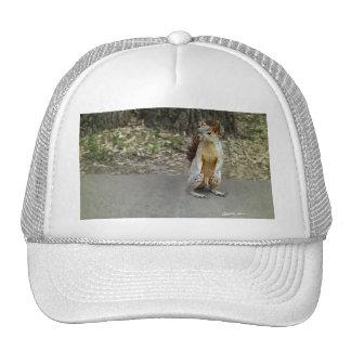 Squirrel 1 trucker hat