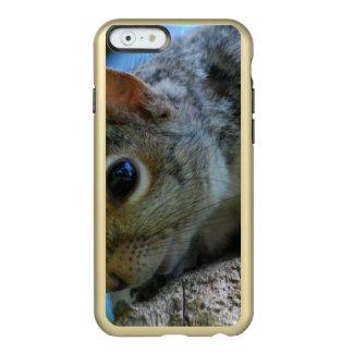 squirrel-25.jpg incipio feather® shine iPhone 6 case
